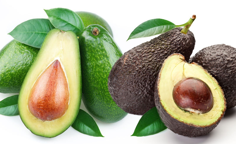 Grow an Avocado Tree in the Desert
